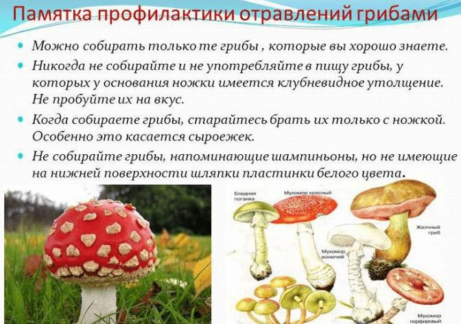 меры профилактики при отравлении грибами