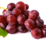 Девичий виноград ядовит или нет для взрослого и ребенка - применение