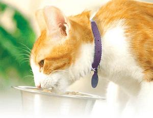 диета кота после отравления