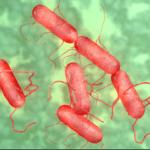 Инкубационный период ротавирусной инфекции у взрослых и детей - длительность