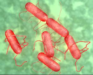 Инкубационный период инфекции - сальмонеллез