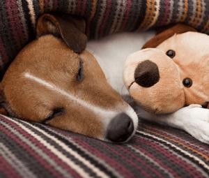 Первая помощь при отравлении собаки изониазидом