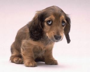 Регидрон щенкам можно ли ?