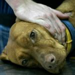 Отравление тубазидом собак и людей - симптомы и последствия