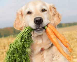 разрешенные продукты собаке при отравлении