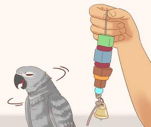 лечение попугая при отравлении