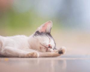 Симптомы отравления котенка