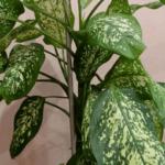 Цветок рододендрон (азалия) -  ядовитый или нет для человека и животных