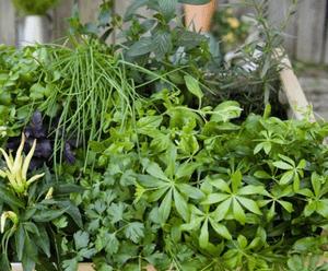 Ядовитые травы для организма