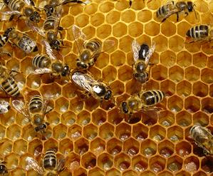 передозировка медом