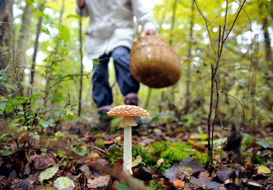 Cимптомы грибкового отравления