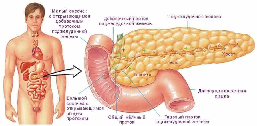 Какие симптомы дает больная поджелудочная железа?
