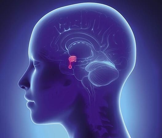 Карликовость гипофиза: причины, симптомы, диагностика, лечение