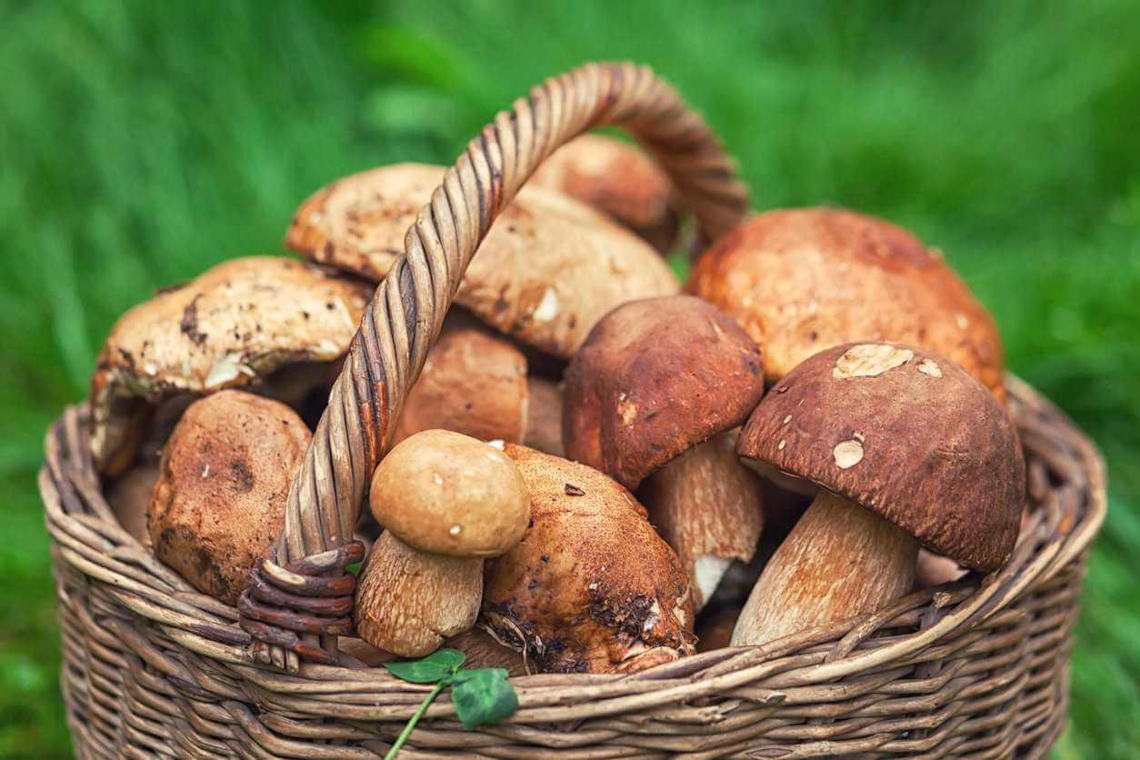 Идём за грибами