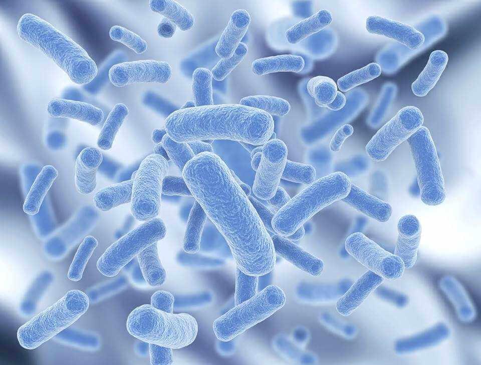 Как принимать антибиотики от кишечной инфекции?