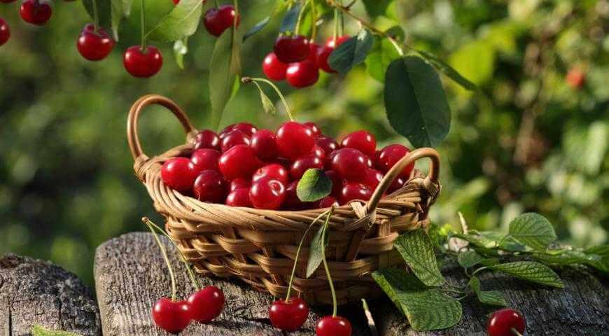 Какими полезными для женщин свойствами обладает вишня?