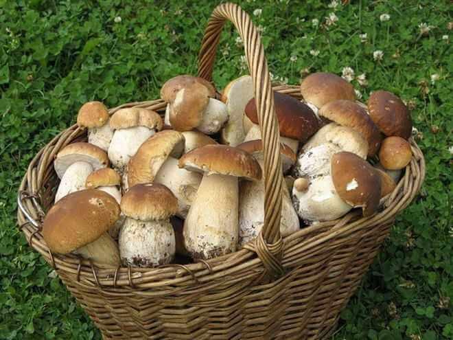 Какая польза и вред от грибов?