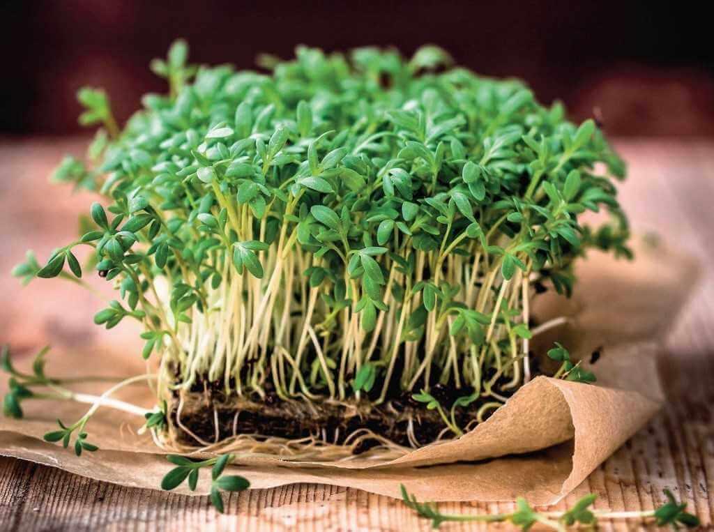 Микрозелень: большая польза в маленьких ростках