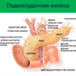 Способы лечения щитовидной железы