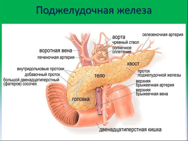 Характеристика и последствия отека поджелудочной железы