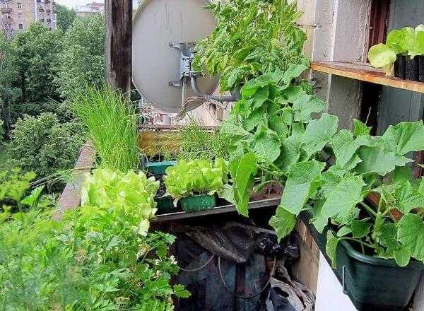Что больше всего подходит для выращивания на балконе?
