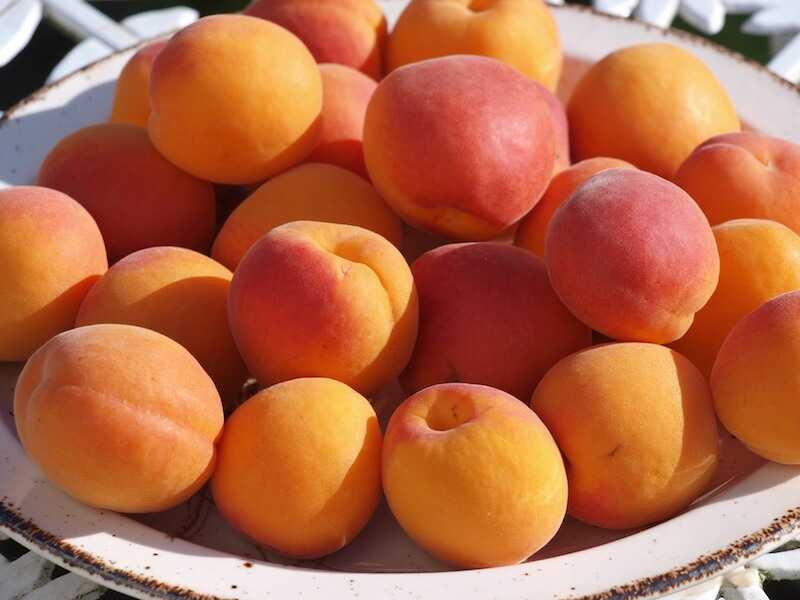 Полезны ли ядра абрикосовых косточек?