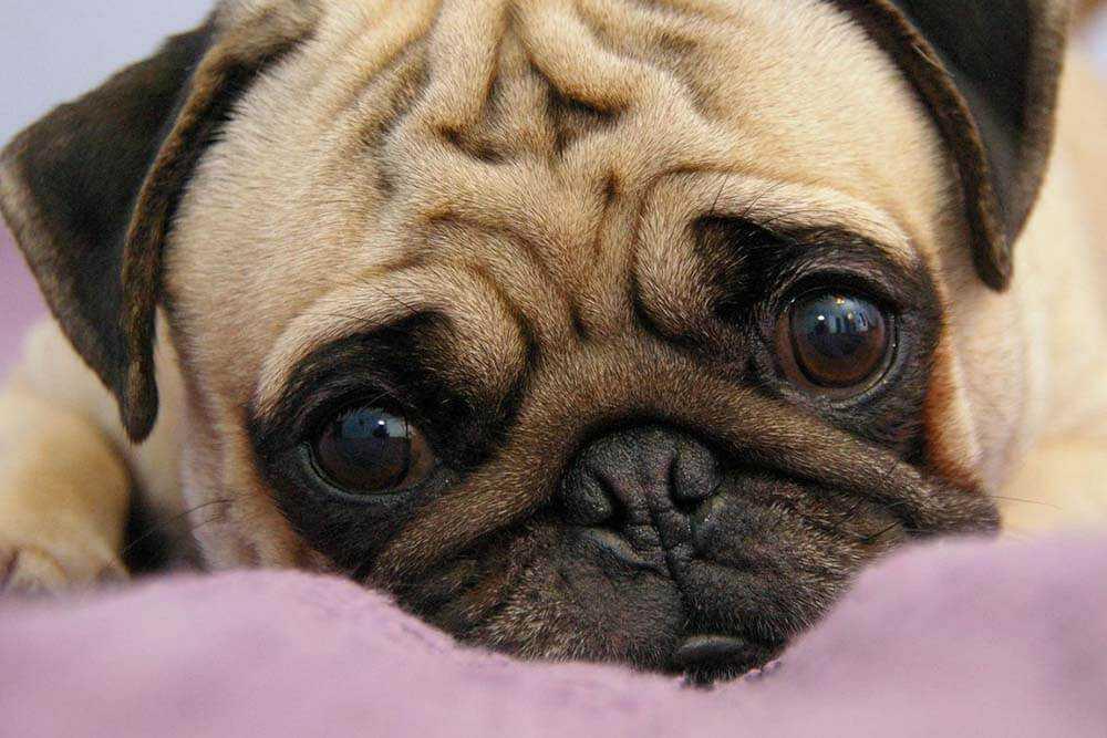 Полезные советы по уходу за собаками для новичков